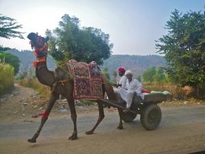 Rasjasthani camel carts