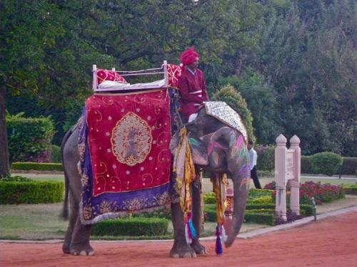 Ceremonial elephants