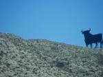 long 6 hour drive from Catalunya to Navarra: black bull steel boards on ridges