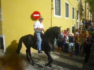 Skilful rider on a Warlander Horse