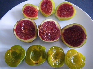 Sun-ripened figs and sweet green gages