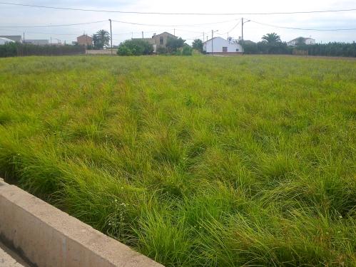 "Chufa ""Tiger nut"" farms along the Via Verde"