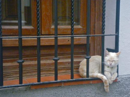 Albacín: sleepy cat